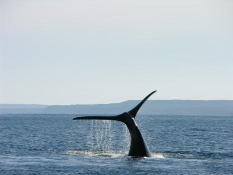 10 hej przygodo (6) wieloryby