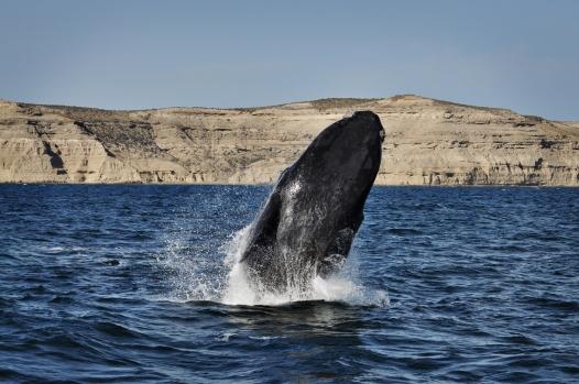 10 hej przygodo (7) wieloryby